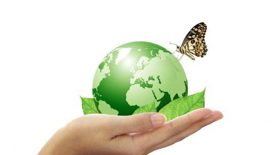 butterfly-green-earth